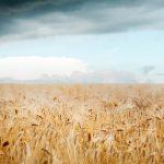 harvestdarkness